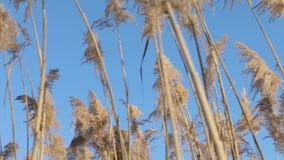 Reed em uma beira do lago filme
