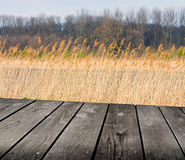 Reed and empty wooden deck table. Stock Photos