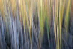 Reed - extracto de la falta de definición de movimiento de la naturaleza foto de archivo libre de regalías