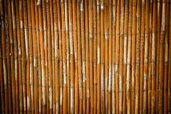 Reed fence garden Royalty Free Stock Photo