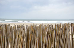 Reed fence. Protect the beach Stock Images