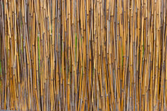 Reed fence, texture. Vertical structure stock images