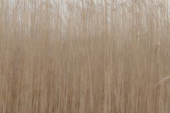 Reed field in abstract form Stock Photos