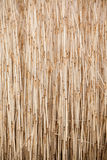 Reed on the field Royalty Free Stock Photo