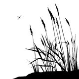 Reed and flying dragonfly - vector illustration Royalty Free Stock Images