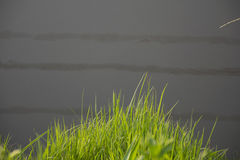 Reed foreground on marsh. Royalty Free Stock Photos