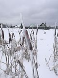 The reed after freezing rain Stock Images