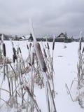 The reed after freezing rain. Khlopenyovo, Pushkinskiy rayon, Russia – November 12, 2016: Morning after freezing rain, reed in ice. On background Khlopenyovo Stock Images