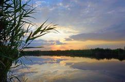 Reed gegen den Sonnenuntergang Stockfotos