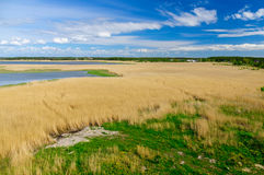 Reed grass backwater area under blue sky with clouds Stock Photo