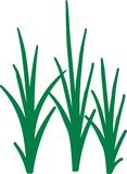 Reed grass green. Plant vector Royalty Free Stock Photo