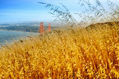 Reed grass on headland, Golden Gate National Recreation Area Stock Photo