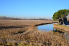 Reed grass river landscape Royalty Free Stock Photos