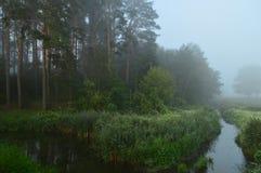 Reed, hierba del bastón por la mañana brumosa Fondo del concepto de la caza Imágenes de archivo libres de regalías