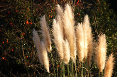 Reed hill. Nature reed hill, landscapes, new Royalty Free Stock Photos