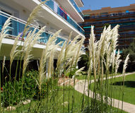 Reed in a hotel court yard. Reed in a hotel court yard in Malgrat de Mar,Spain. Hotel buldings with Balconies as background Royalty Free Stock Photos