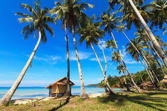 Reed huts and coconut palms. On the sandy beach. Beautiful sea landscape Stock Image