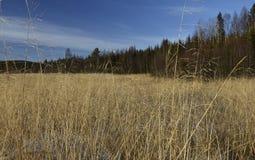 Reed im Vordergrund und in einem Wald im Hintergrund Stockfotos