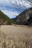 Reed Lake at Heavenly Jiuzhaigou Royalty Free Stock Image