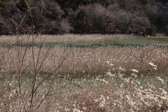 Reed Lake in Hemelse Jiuzhaigou Stock Foto's