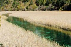 Reed lake in Jiuzhaigou Royalty Free Stock Images