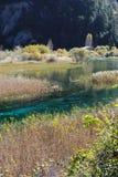 Reed lake in Jiuzhaigou Stock Images
