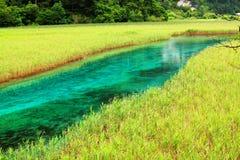 Reed lake jiuzhaigou summer Stock Image