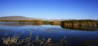 Reed lake in North West China Stock Image