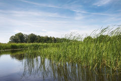 The Reed Lands near the village Dwarsgracht. Stock Photos
