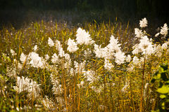 Reed leaves in the Autumn river Stock Photography