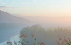 Reed a lo largo de un canal de niebla Imágenes de archivo libres de regalías