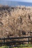 Reed marsh Stock Photos
