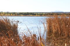 Reed marshes Stock Photo