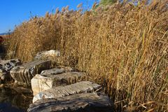 Reed marshes Royalty Free Stock Photos