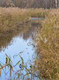 Reed mirroring in river Stock Images