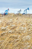 Reed near the oil fields. Stock Photography