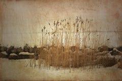 Reed nell'orario invernale Immagine Stock