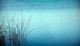 Reed at night reflected in water Royalty Free Stock Image