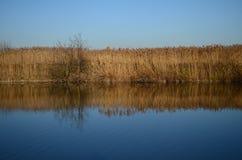 Reed no lago Fotografia de Stock Royalty Free