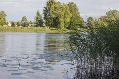 Reed no rio imagem de stock royalty free