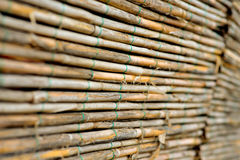 Reed panel Royalty Free Stock Images