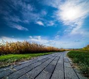 Reed path sky clound Stock Photography
