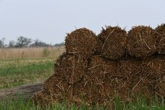 Reed is piled up and ready to be picked up. Reed away along the waterfront and piled up and ready to be picked up location: Nieuwkoopseplassen the netherlands stock photography