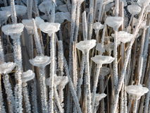 Reed plant with ice pieces Stock Photography