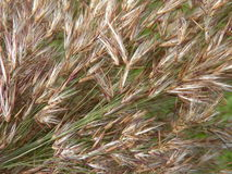 Reed plant pattern Royalty Free Stock Photo