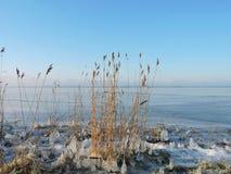 Reed plants near lake Stock Photography