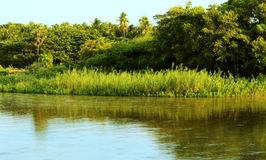 Reed plants and river. Landscape at morning time Royalty Free Stock Image