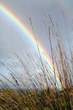 REED RAINBOW. A picture of a rainbow seen behind thatch reed on the Hermanus,South Africa cliffe path Stock Photo