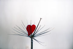 Reed and red heart Stock Photography