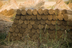 Reed for roof. Romanian agriculture materials for roof nature Royalty Free Stock Photography